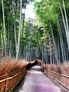foresta di bamboo kyoto