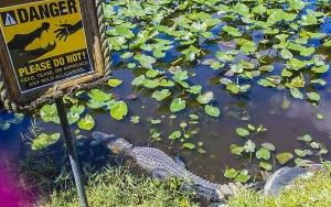 pericolo alligatore-miami-quelliconlavaligia